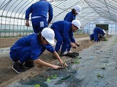 やまびこ農産1.jpg