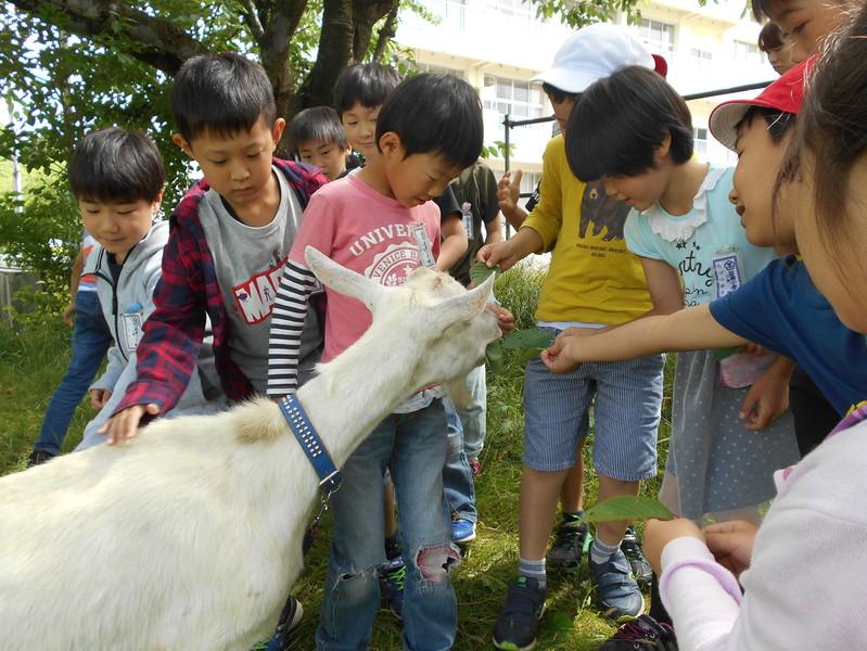 http://sasaoka-es.agano.ed.jp/DSCN0256.JPG